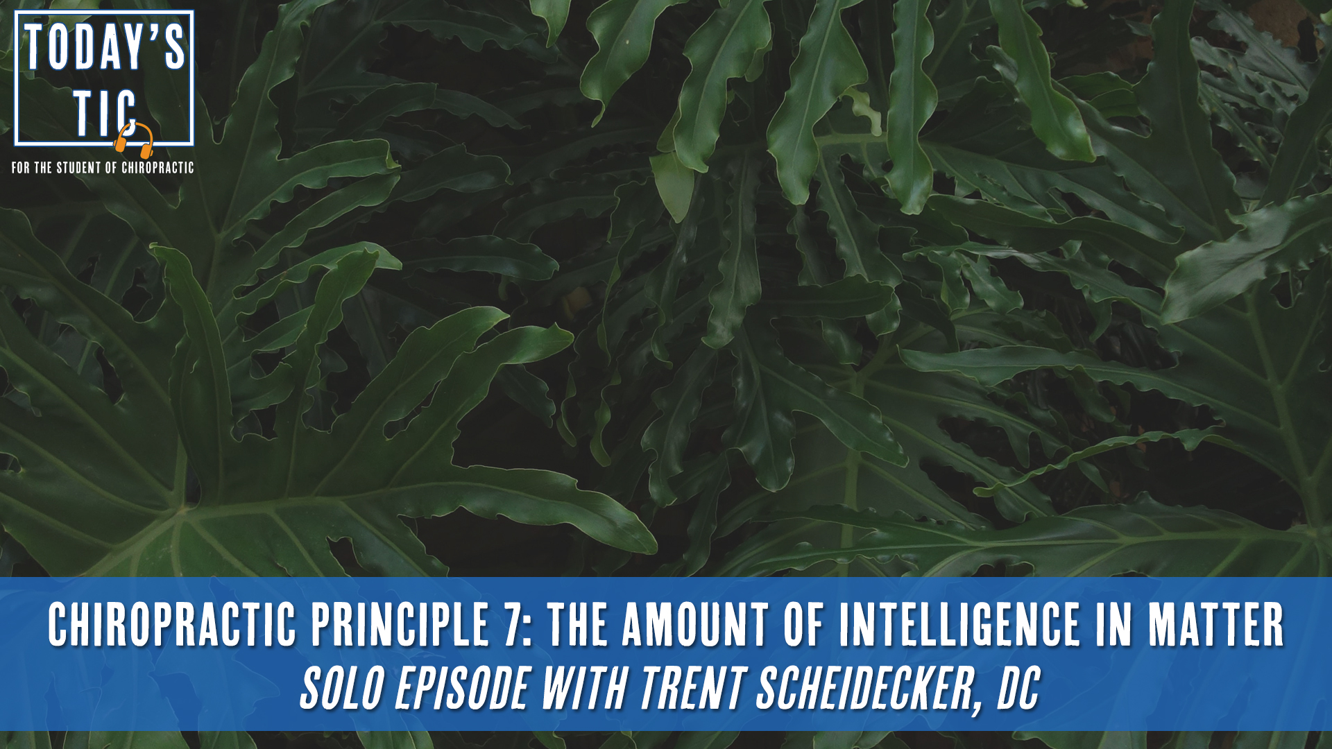 Chiropractic Principle 7: The Amount of Intelligence in Matter